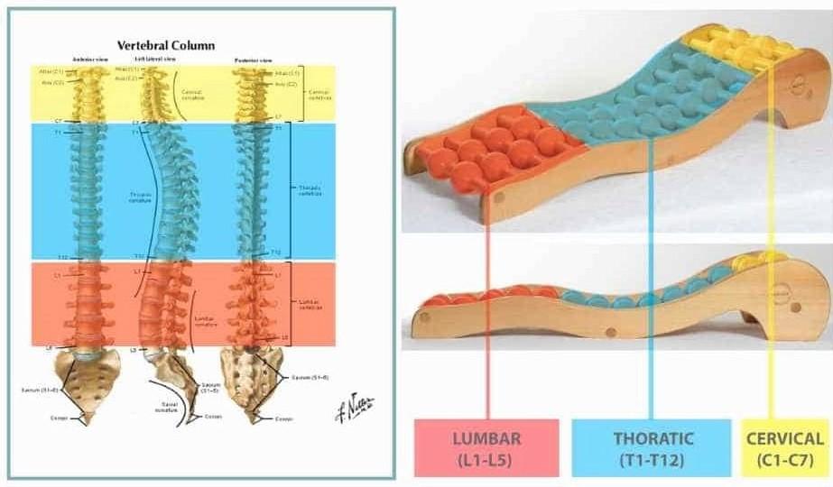 Backrack-colori-e-spine-1